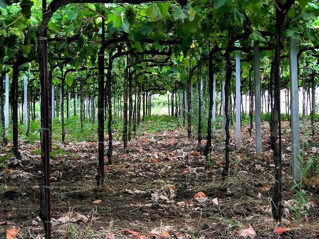 ColliPesaresi.com: un sito, un vino, unterritorio